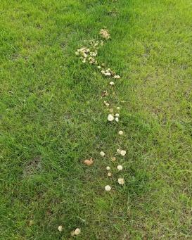 Mushroom trails... are Faeries afoot?